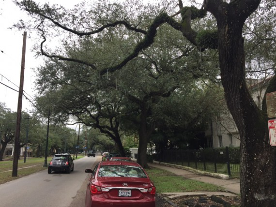 This street is a popular Mardi Gras parade route.  Note the many strands of beads hanging in the trees where they have been caught.